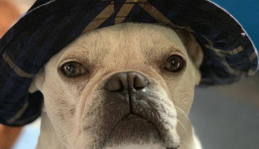 "CORONA STYLE ""ユーティカハット犬"""